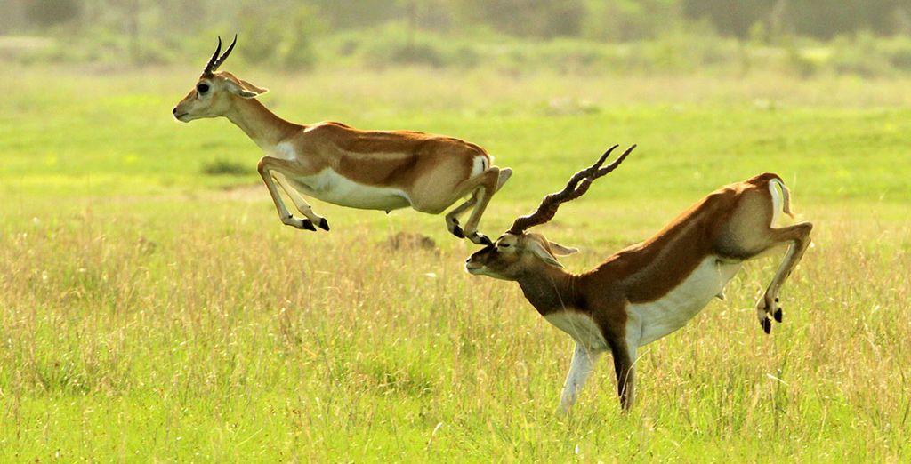 Ressentez toute la majesté de la faune environnante