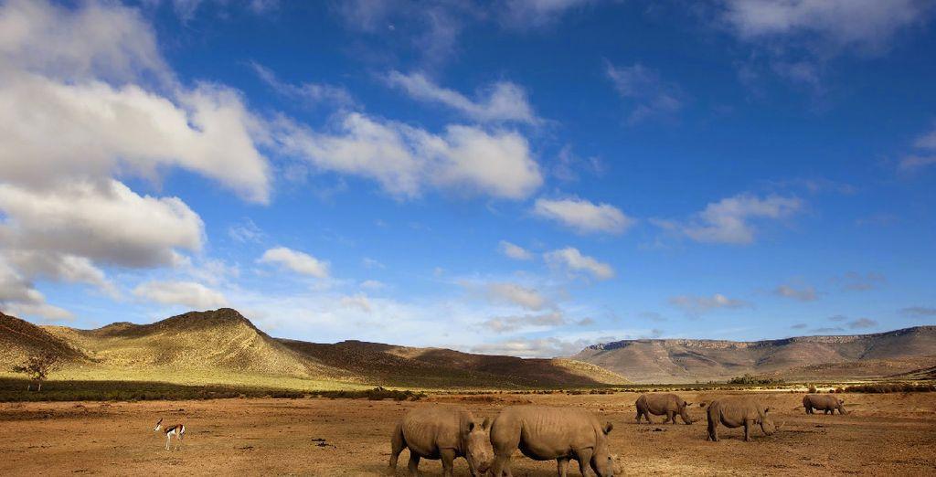 En combinant un safari au coeur d'une réserve privée
