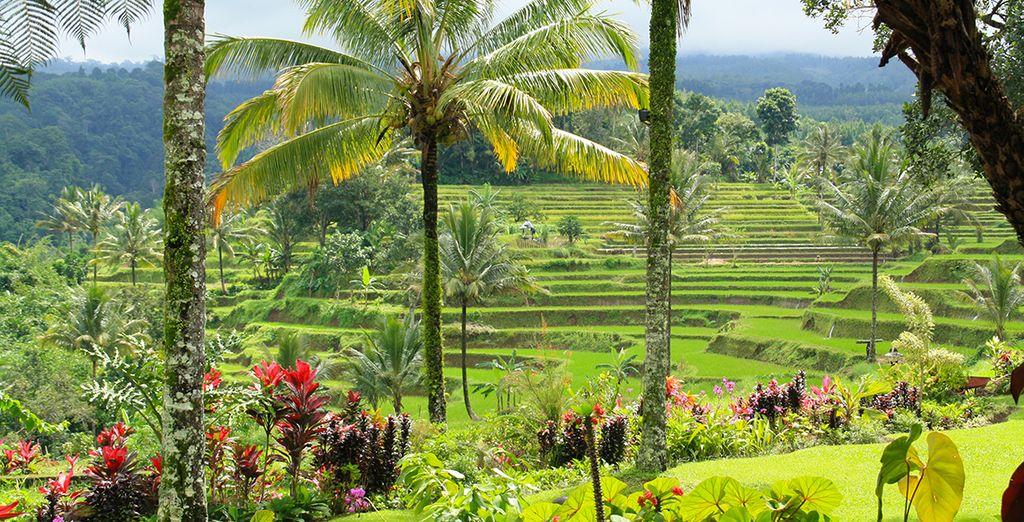 Paysages verdoyants de l'Indonésie