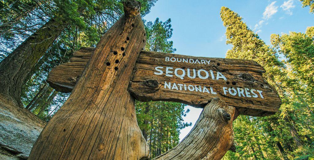 Le Sequoia National Park l'un des plus beaux parcs de la Californie