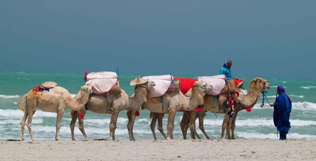 Bienvenue en Tunisie !