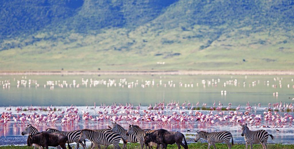 Au Ngorongoro