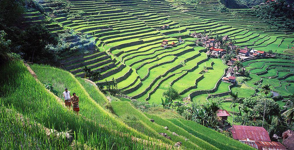 photographie des rizières de Philippines