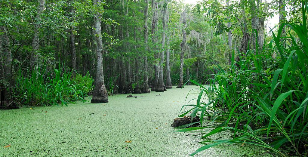 En passant par les marais et bayous