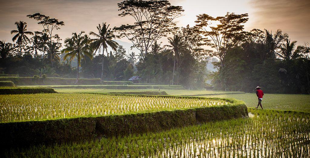 Et rizières à perte de vue