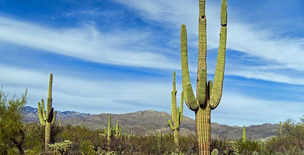 Parcs naturels au Mexique et Cactus