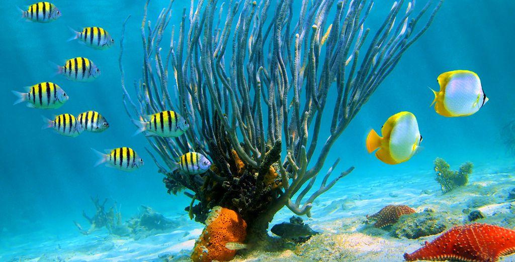Ou découverte des fonds marins