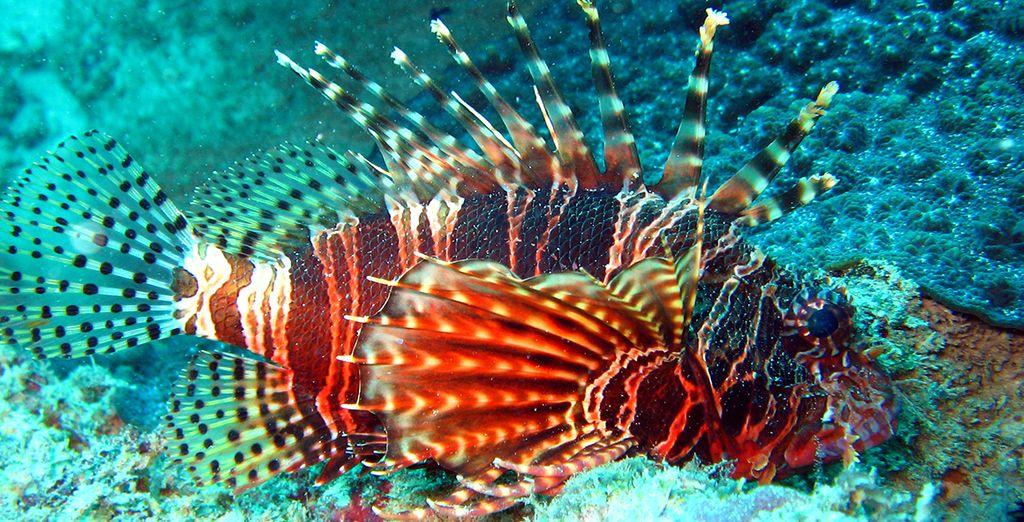 Ce n'est pas tout, vous pourrez aussi vous émerveiller de la beauté des fonds marins