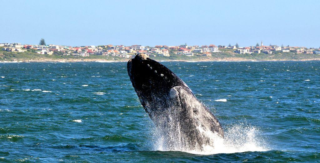 L'endroit idéal pour voir les baleines australes !