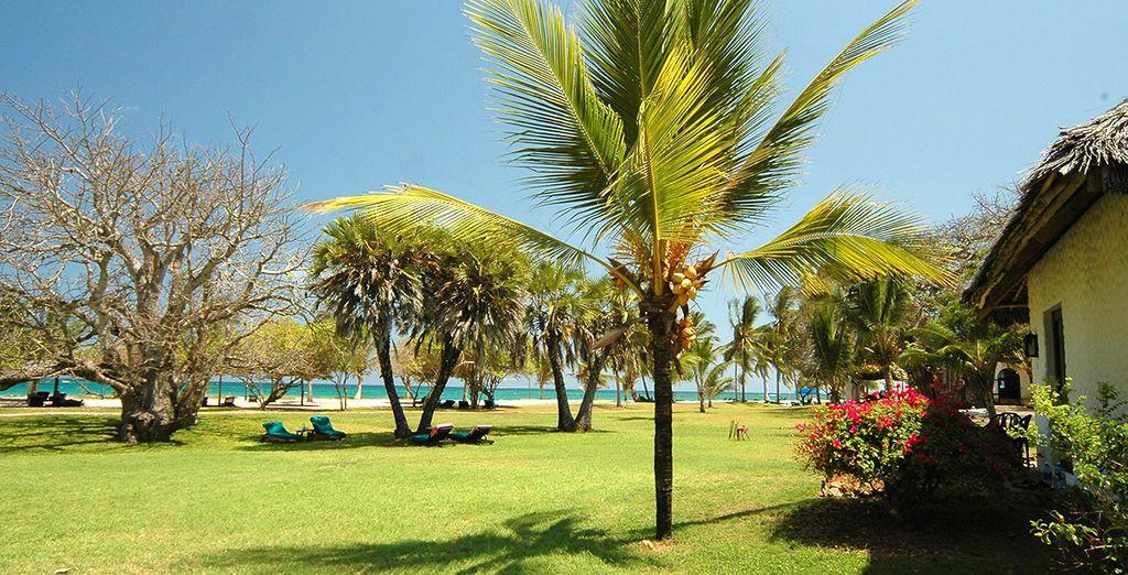 Le dépaysement commence au Jacaranda Indian Ocean Beach