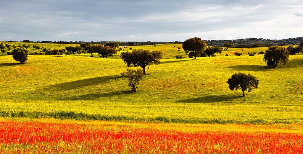 Niché dans le centre de Vila Viçosa au coeur de l'Alentejo, une région authentique et méconnue du Portugal