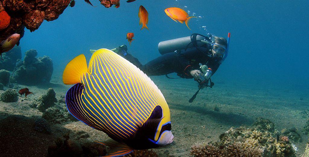 Ou explorez les fonds marins de la mer Rouge !
