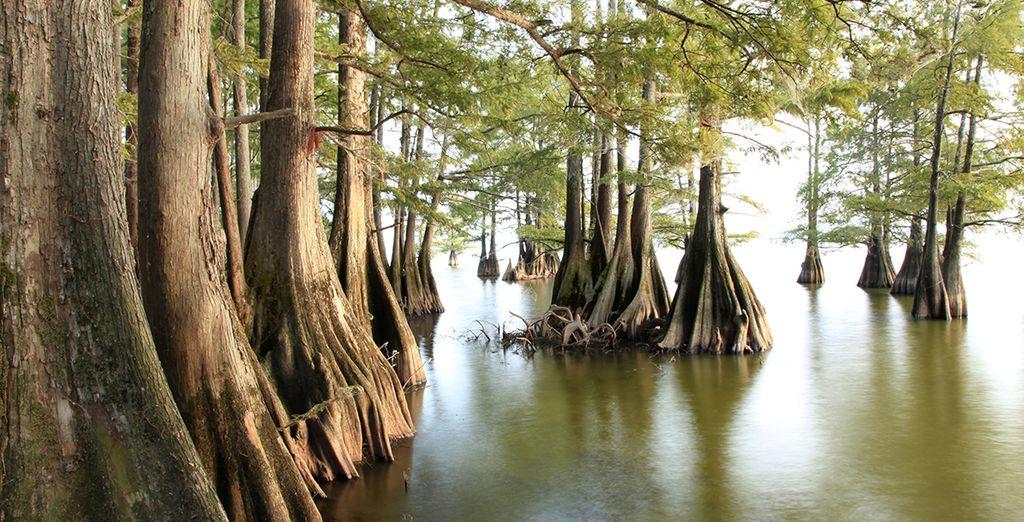 Explorez les bayous