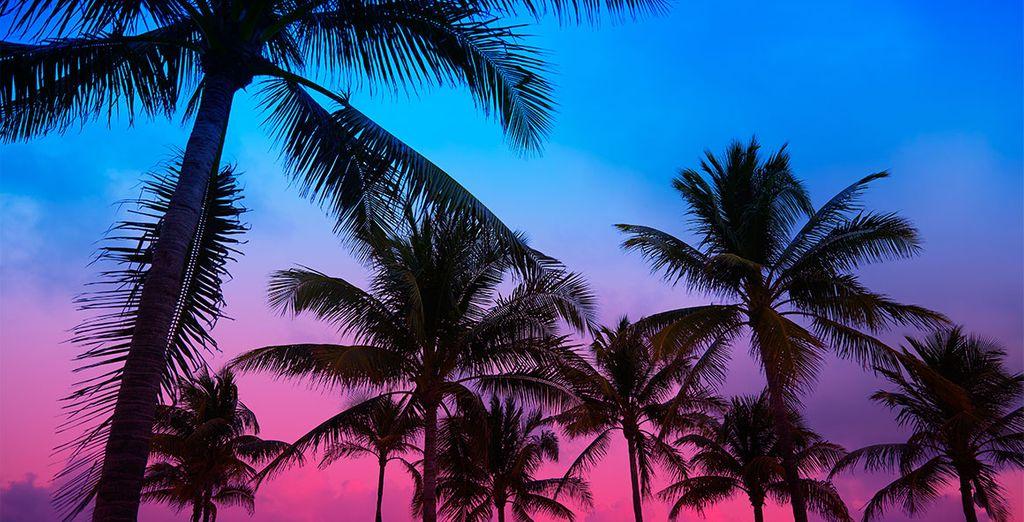 Miami est une ville aux mille couleurs que vous risquez d'adorer !