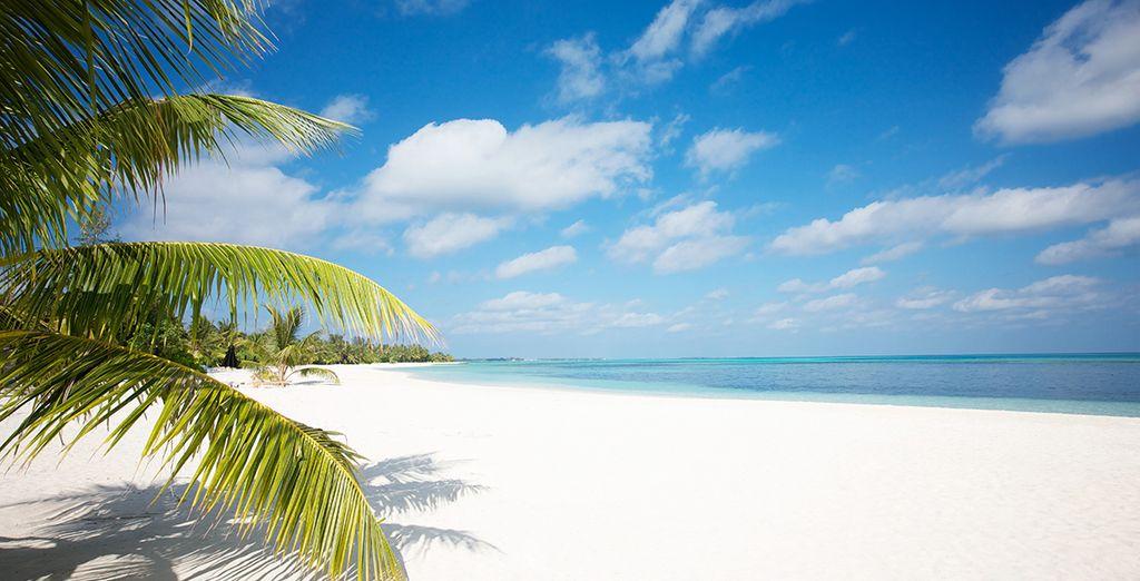 Vos vacances s'annoncent inoubliables !