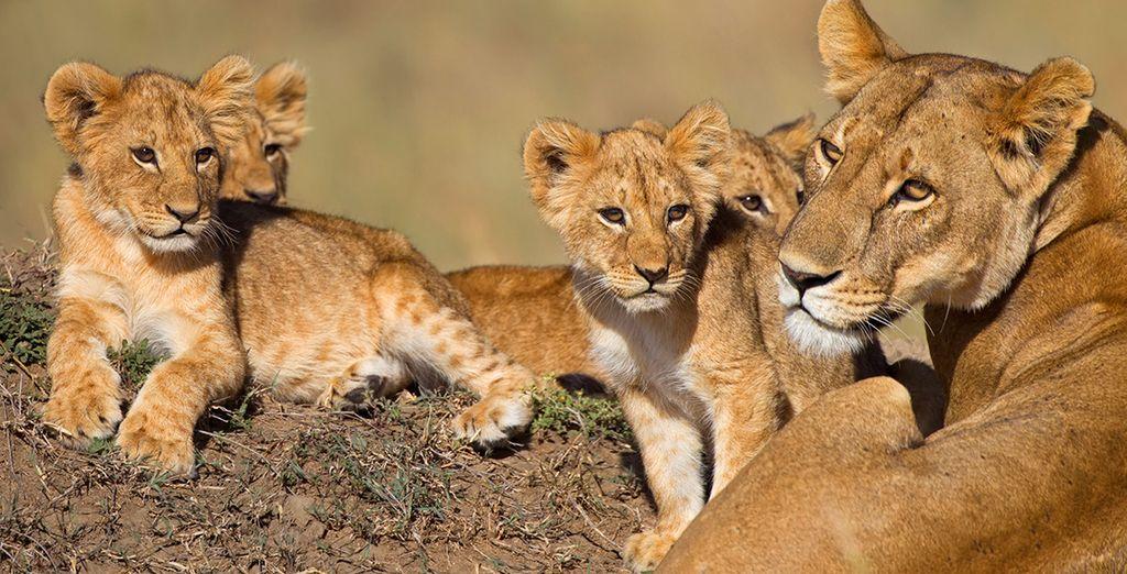 Vous reviendrez conquis par les beautés du Kenya !