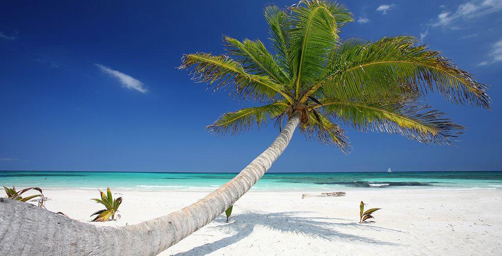 Laissez-vous transporter par les eaux turquoise de Miami et Cancun...