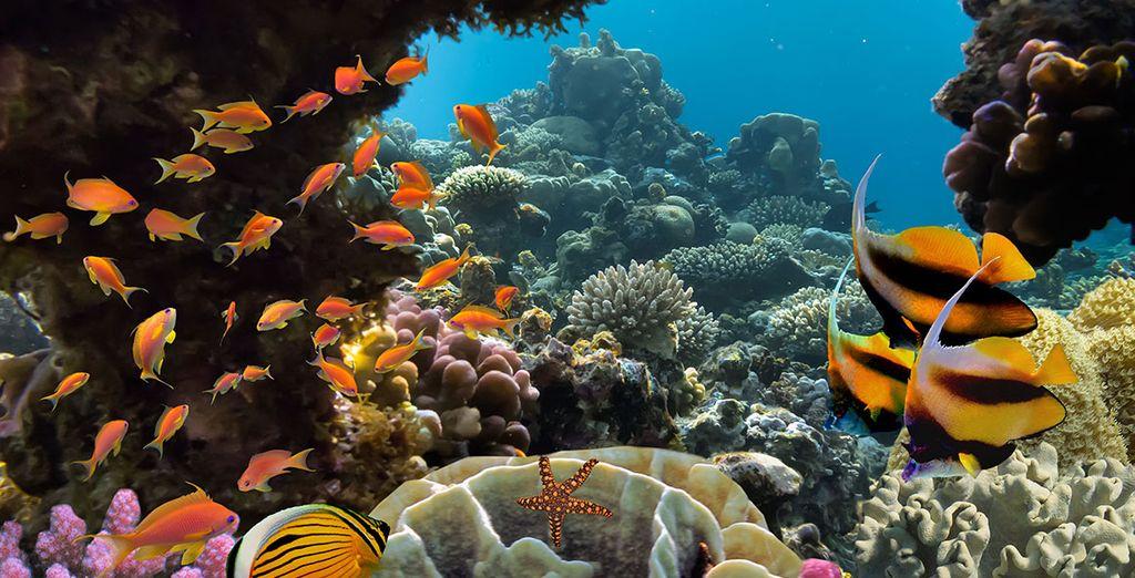 Et plongez pour explorer profondeurs marines !