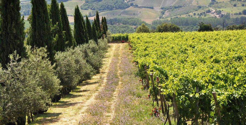Au coeur de la Toscane, dans la belle région de Chianti