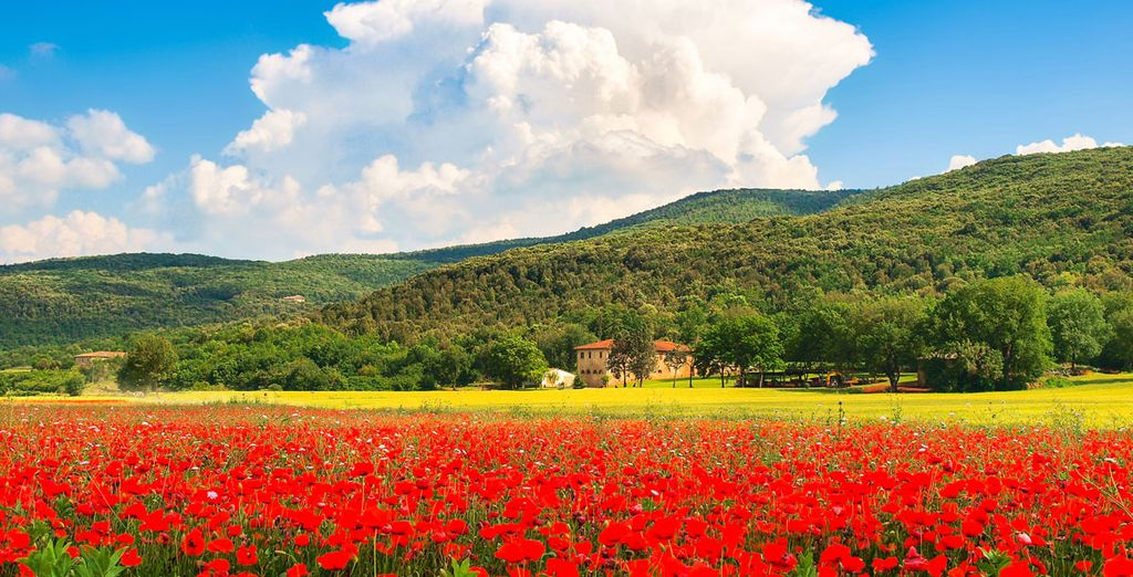 Monteriggioni et ses beaux champs de fleurs