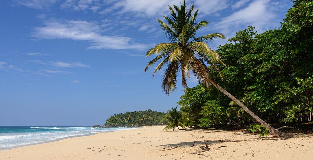 Sur la côte nord de Punta Cana, le long de la belle plage d'Uvero Alto