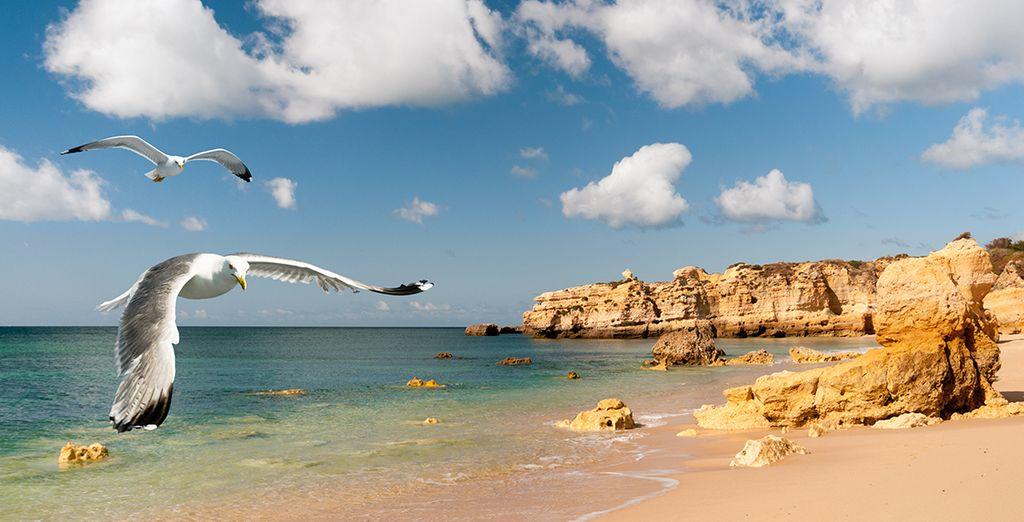 N'attendez plus et laissez vous charmer par les beautés naturelles de l'Algarve... Bon séjour !