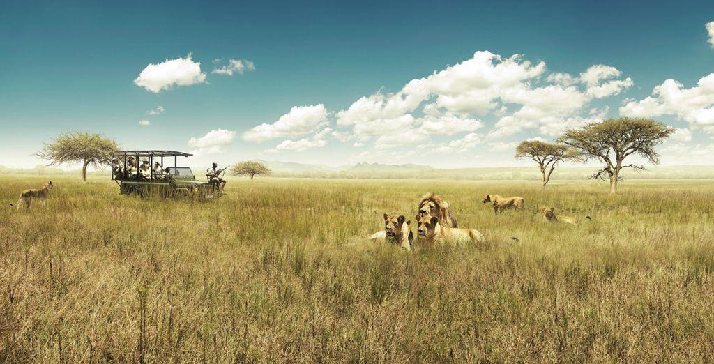 Et partirez à la rencontre de la faune sauvage du Parc Kruger