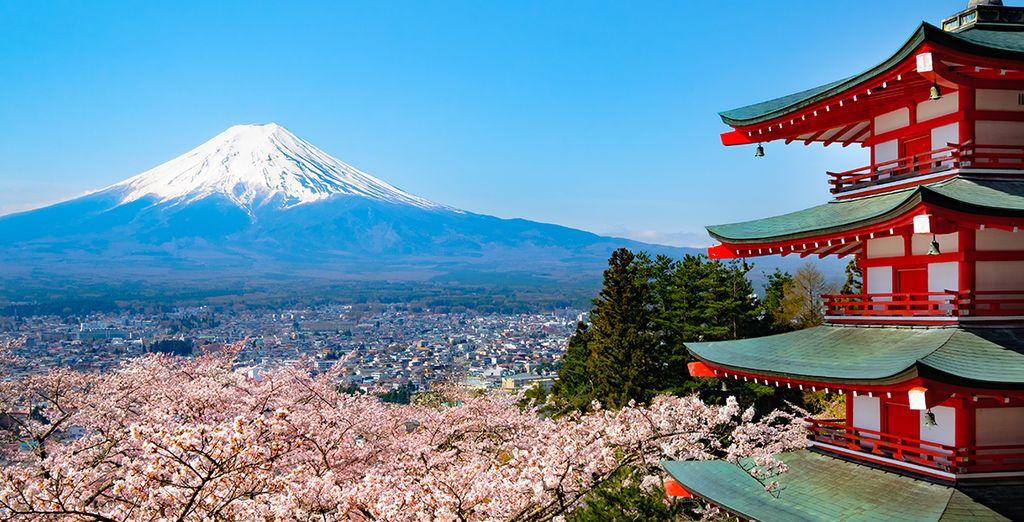 Et si vous partiez à la découverte du Japon ?
