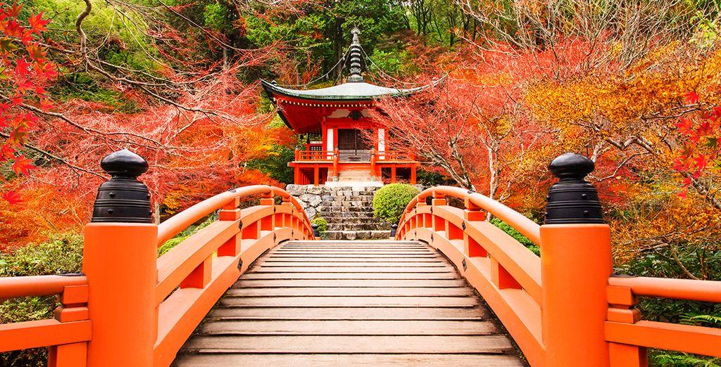 Suivez-nous au Japon