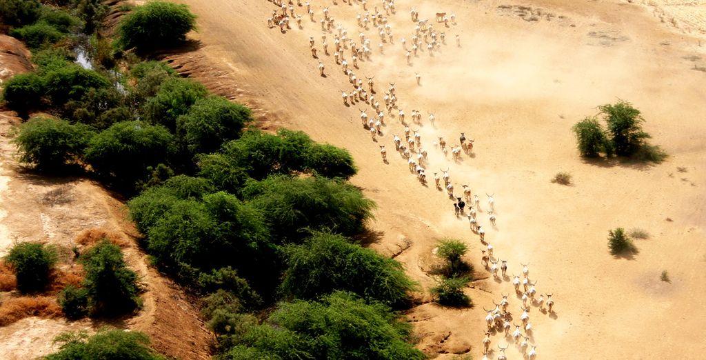 Partez rencontrer les animaux sauvages du Sénégal