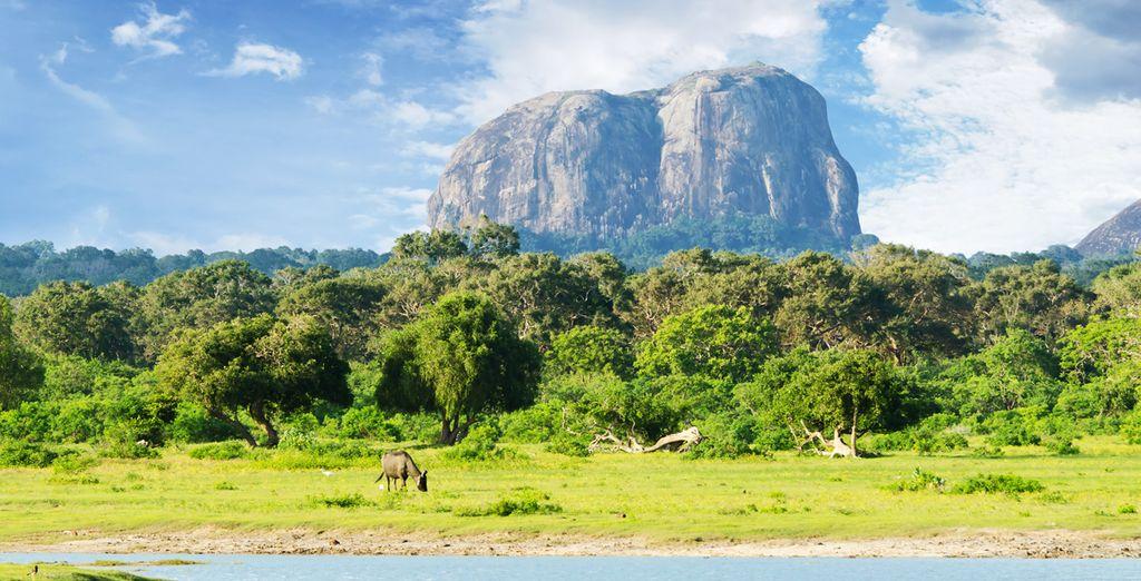 Nature préservée et parc national du Sri Lanka