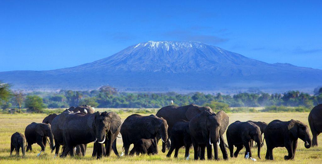 Départ pour un safari entre rencontre du big five ainsi que du magnifique paysage offert grâce au Kilimandjaro