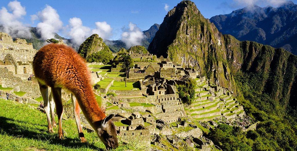 Photographie du Pérou, de ses paysages naturels naturels majestueux, de ses sites historiques ainsi que de la faune du pays, des lamas