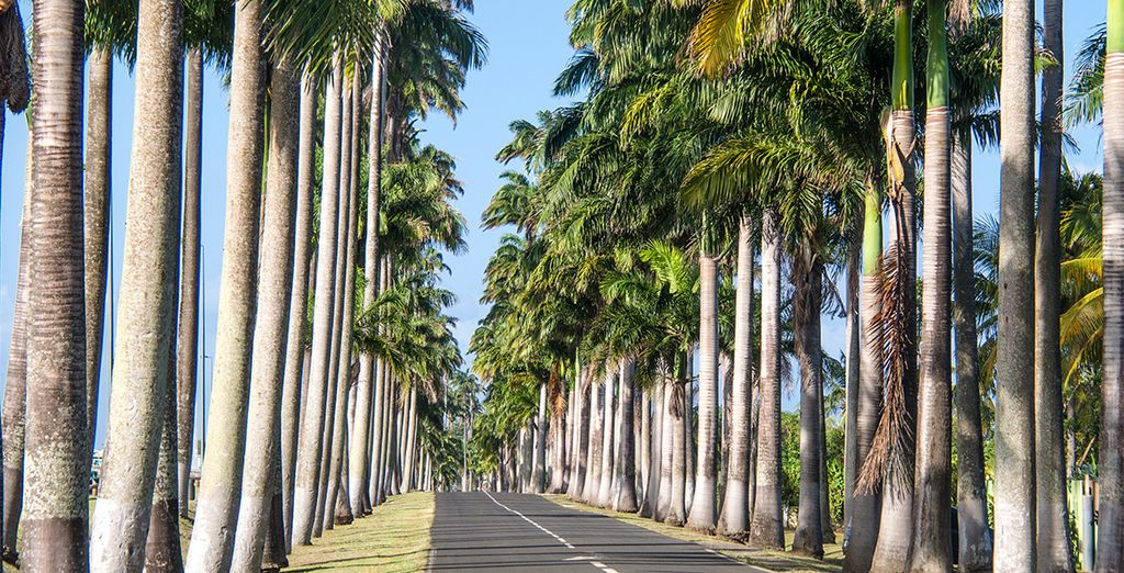 Longez des routes bordées de palmiers