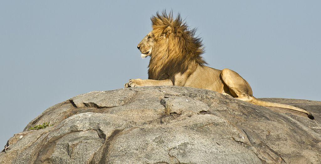 Et l'aire protégée de Ngorongoro