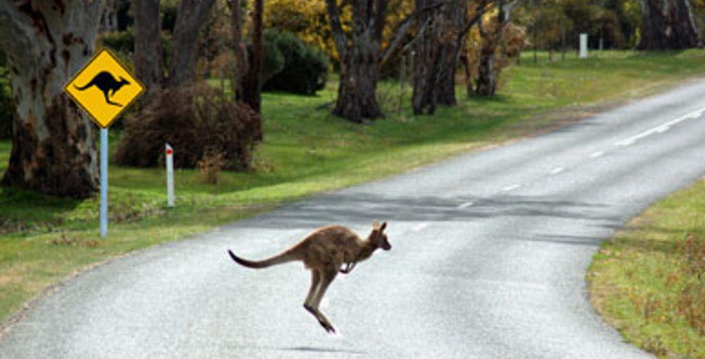 - Trois circuits en Australie - 3* & 4* - Melbourne / Sydney - Australie Sydney