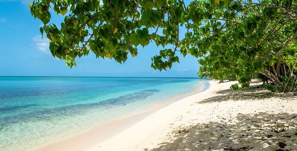 Plage de sable blanc en Guadeloupe et eaux turquoise