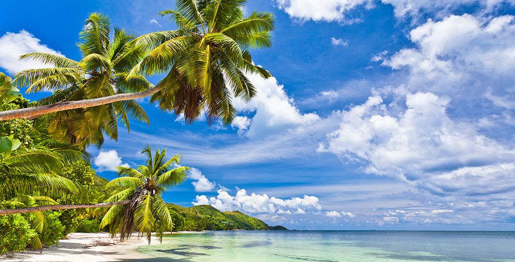 Baignez-vous sur la magnifique plage de Anse Lazio