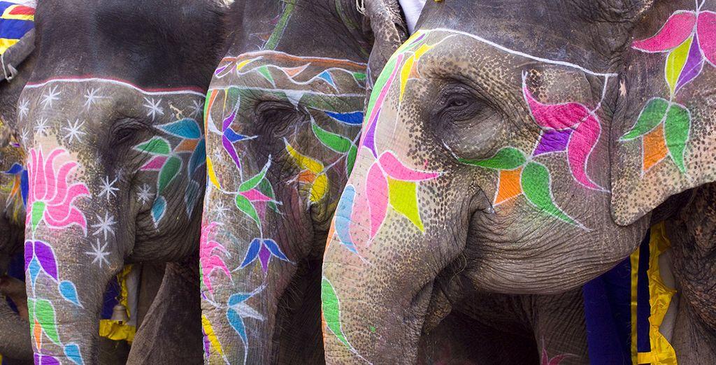 Vous effectuerez également une balade d'éléphants, une expérience unique...