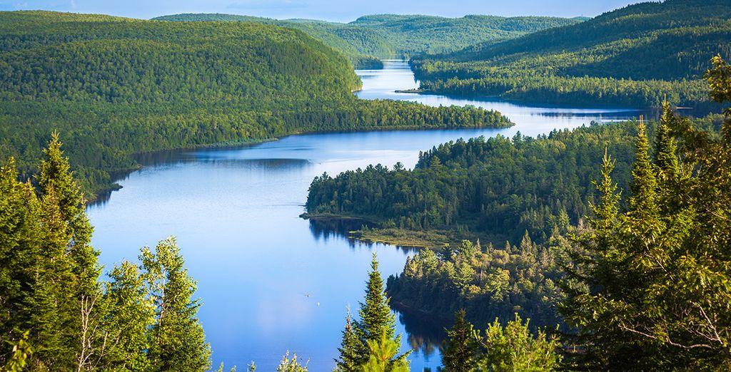 Paysage verdoyant du Canada et ses grandes forêts
