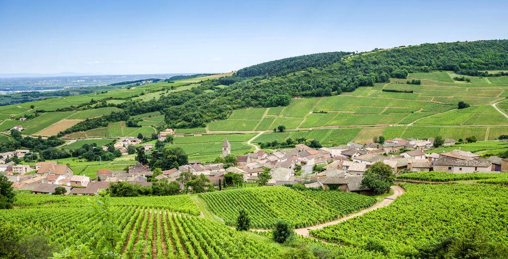 Découvrez les paysages vallonnés de Brionnais