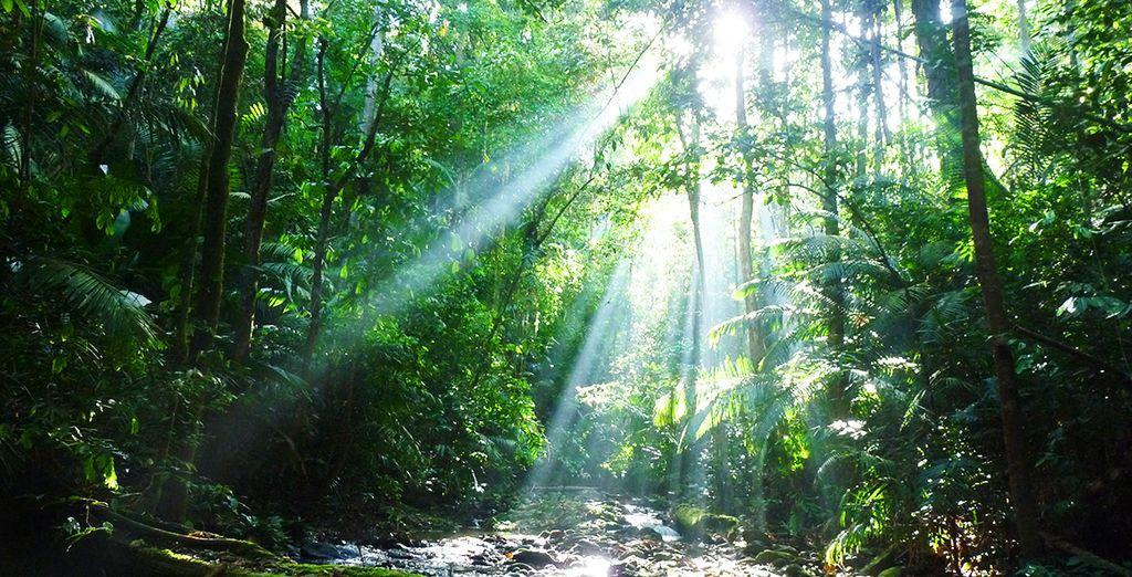 Au calme apaisant de la forêt