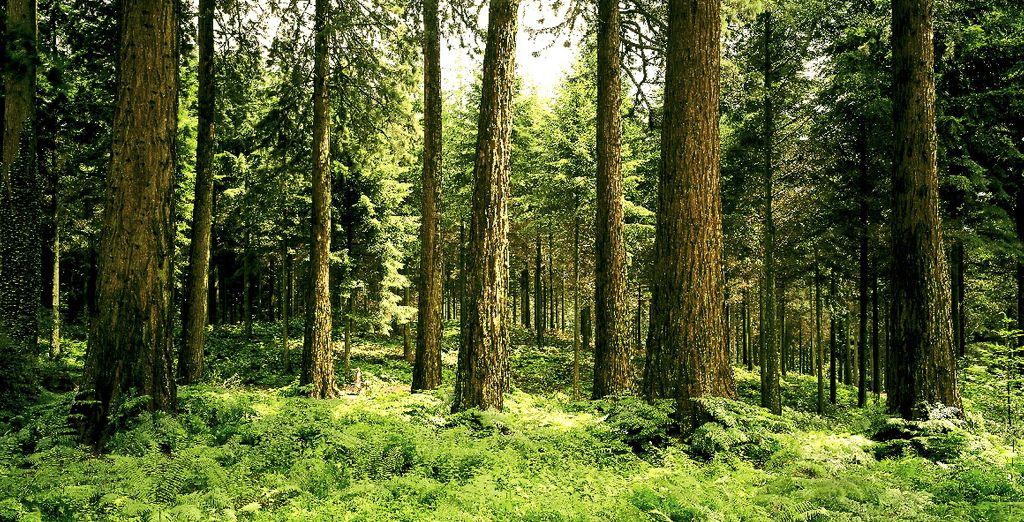 Forêt à côté du Center Parcs Domaine des Bois-Francs