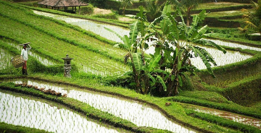 Excellent séjour en Indonésie