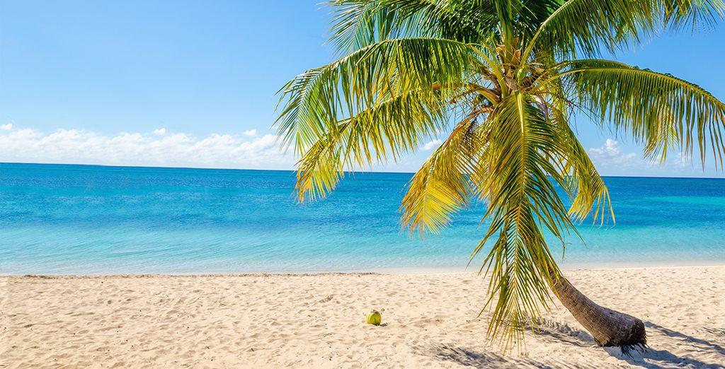 Direction les plages et cocotiers de Guadeloupe !