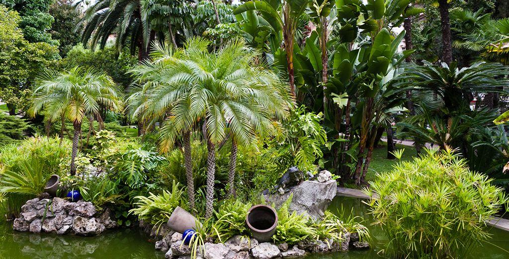 Vous serez niché entre végétation luxuriante...