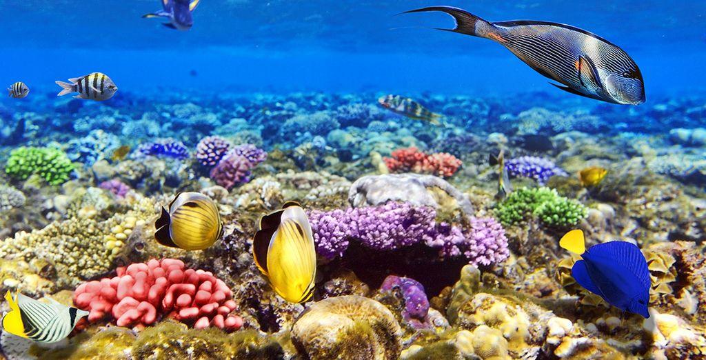 Ne manquez pas les sublimes fonds marins...