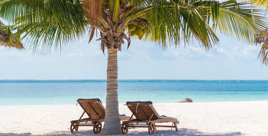 Sur le sable à l'ombre d'un palmier...