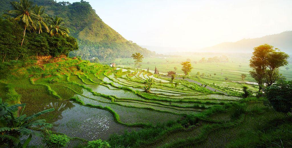 Vous avez envie d'un séjour totalement magique en Indonésie ?
