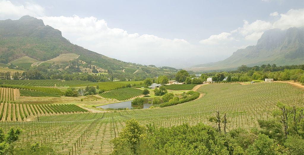 Prenez la route des vins jusqu'au célèbre vignoble  de Stellenbosch...